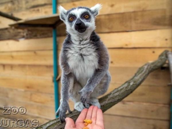 """Истински бейби бум отчитат в """"Зоопарк Бургас"""" с началото на"""