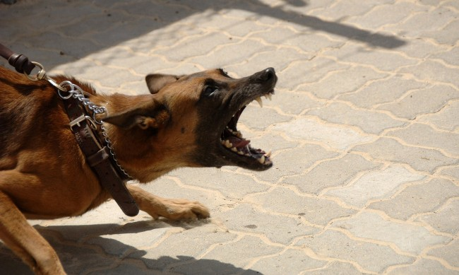 Куче нападна и нахапа две деца в Белозем