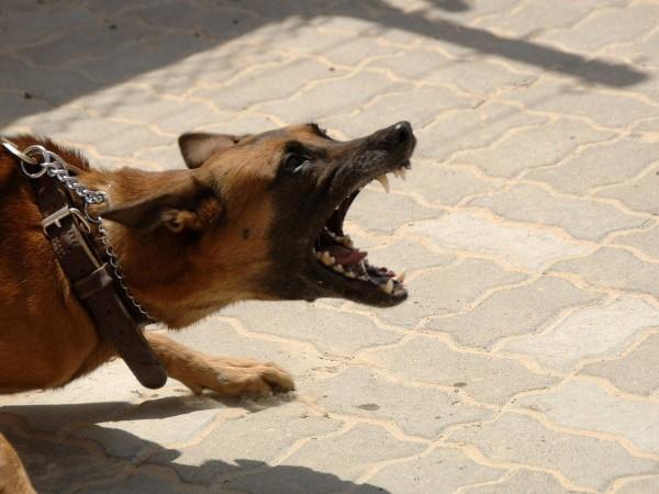 Куче нахапа две деца в двора на детска градина в