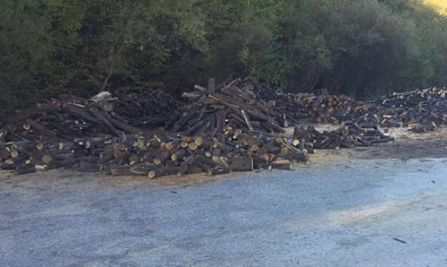 Горските са заловили 1600 камиона незаконни цепеници
