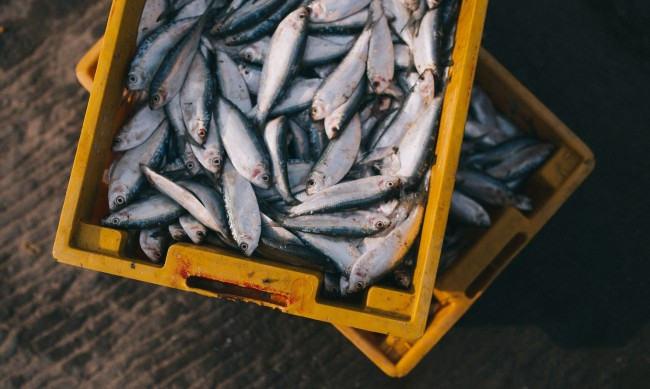 Иззети са 100 кг риба без документи на Руския пазар в Пловдив