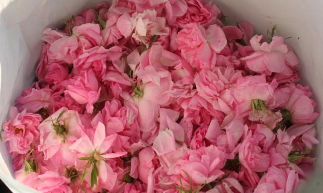 """""""Розите"""" на протест, дават им помощ при невъзможни условия"""