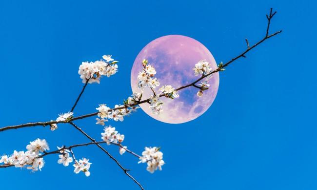 Розова луна - как ще ни се отрази?