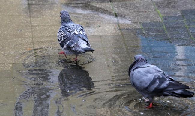 Облачно, ще вали дъжд главно в Южна България