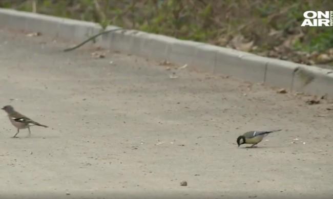 Преброиха врабчетата, в градовете намаляват поради мръсния въздух