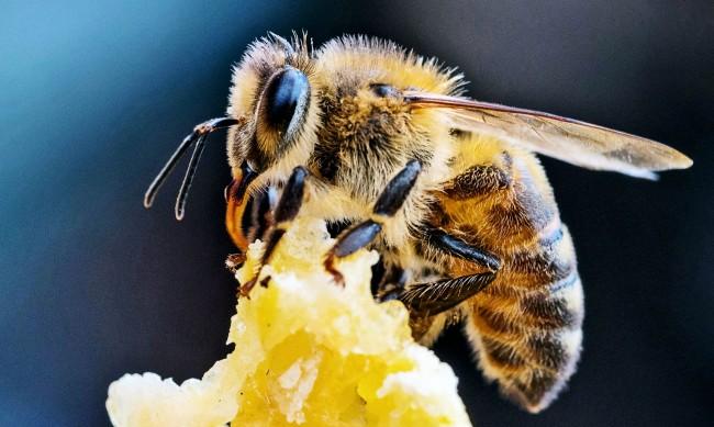Пчелари купуват ниви през Мрежата