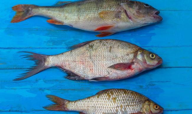 Каква риба да ядете за здраве?