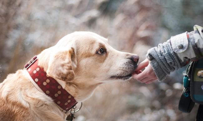 Над 500 кучета от приюта в София намериха стопани за 3 месеца