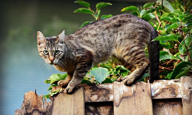 Котките обичат не само истинските кутии, но и въображаеми