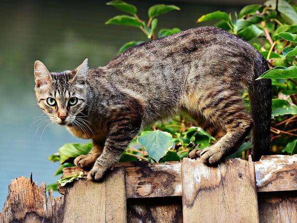 Котките обичат да седят не само в истински, но и