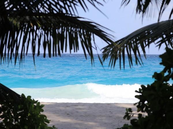 Тъй като Сейшелските острови започнаха своята ваксинационна програма срещу коронавирус