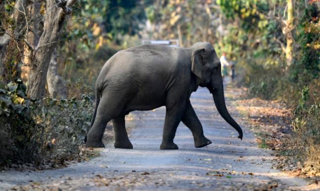 Стадо от 18 индийски слона загина от мълния