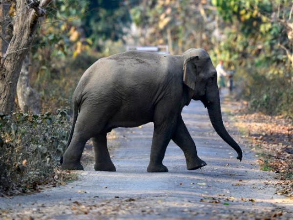 В областта Асам са починали наведнъж най-големият брой слонове от