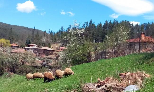 Един цял град се е изнесъл на село през миналата година