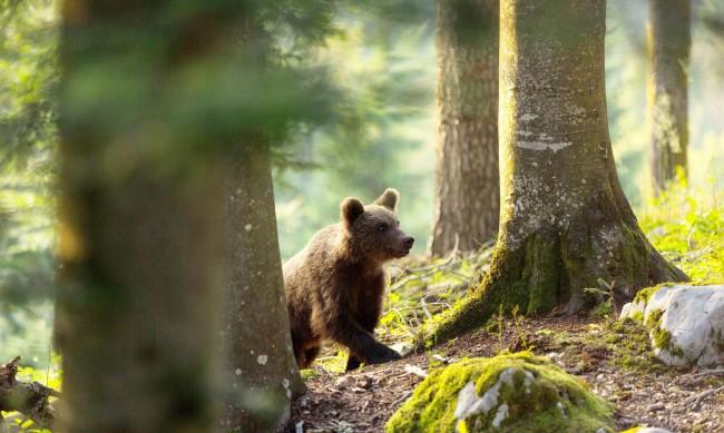 Може ли да съжителстваме отново с мечките?