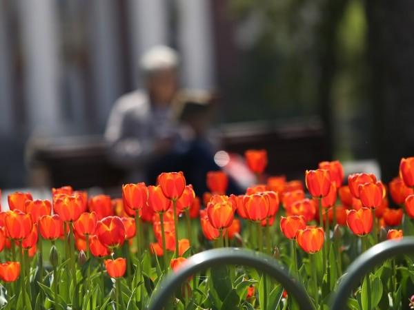 Новата седмица ще започне с топло и предимно слънчево време,