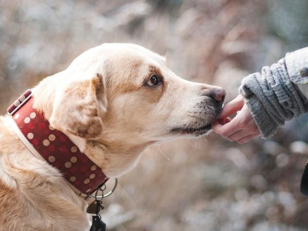 Софиянец хвърли кучето си през балкона. От Софийската районна прокуратура