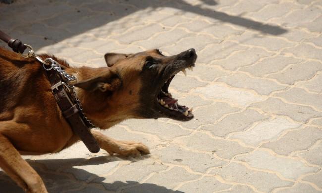 Момче спаси жена от агресивни улични кучета