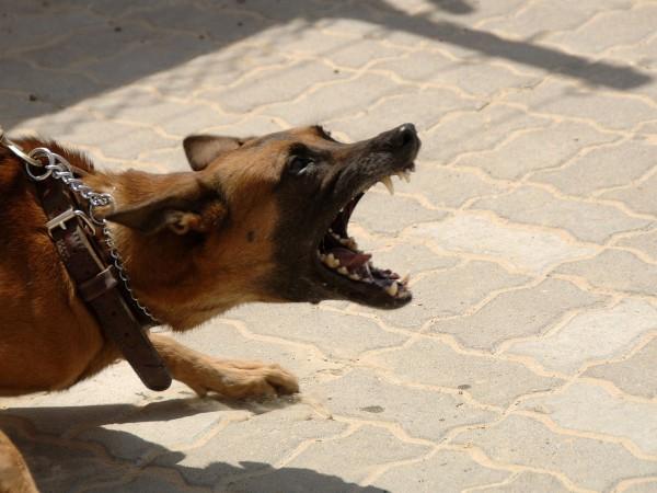 Пореден случай на жестоко нападение от улични кучета, но този