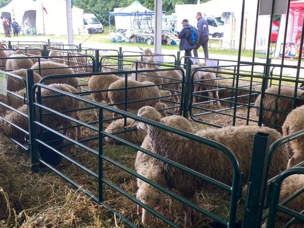 """Източването на земеделските субсидии чрез """"виртуални стада"""" е престъпление, но"""