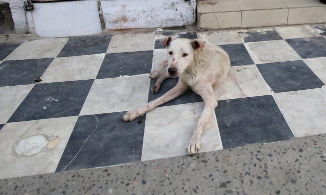 Разследват убийство на улично куче в Тутракан