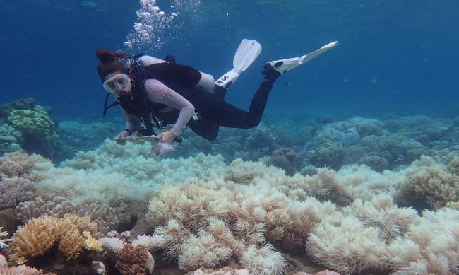 Състоянието на Големия бариерен риф е критично
