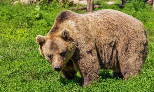 След нападението на мечка: Безопасен ли е районът край Белица?