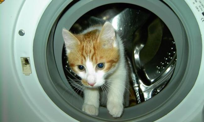 За отмъщение: Мъж изпра котката на жена си в пералнята