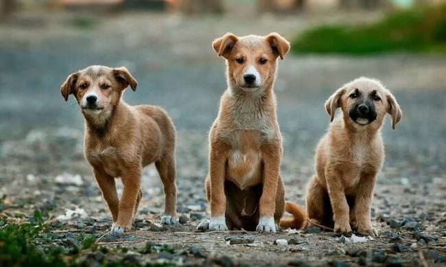 Микробус изсипа 40 кучета в подножието на връх Перелик