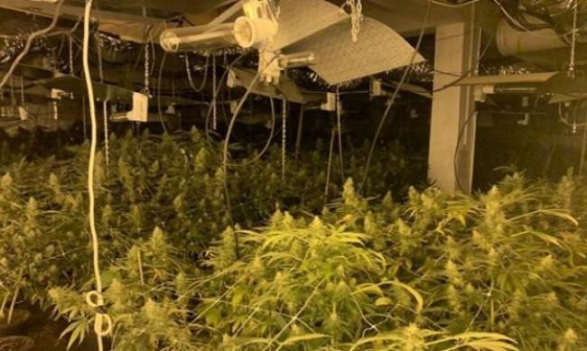 Полицията разби модерна оранжерия за марихуана в Бяла