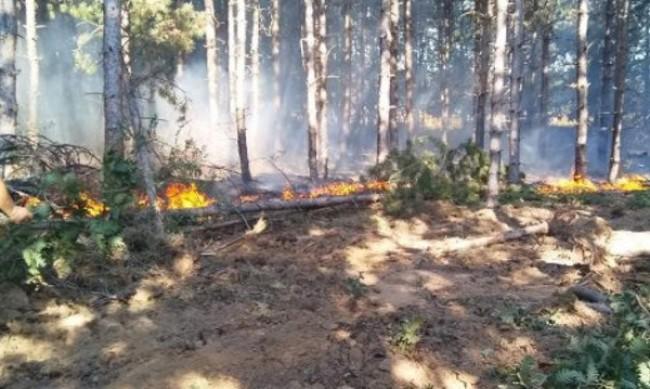 Ден след потушаването на огъня, Сакар планина отново е в пламъци
