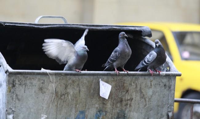Инспектори следят къде хората си хвърлят боклука в Благоевград