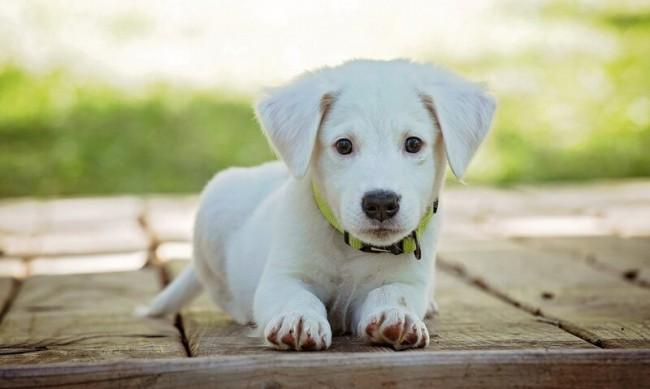 Жестокост: Мъж би куче с тояга по главата, то почина