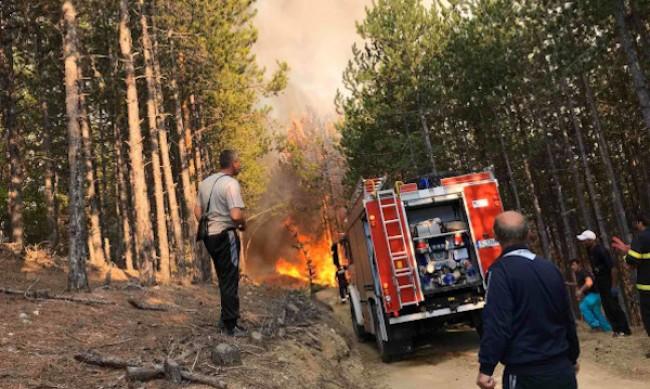 Пожар гори в Стара планина над Твърдица