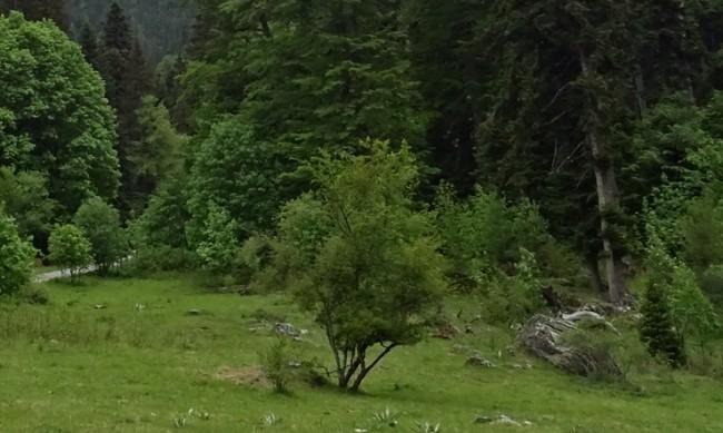 """Защитените зони от """"Натура 2000"""" се увеличават"""