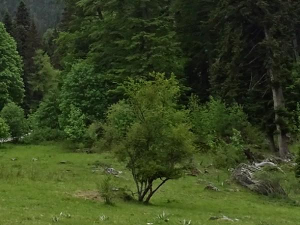 Правителството увеличи площта на защитени зони за опазване на природните