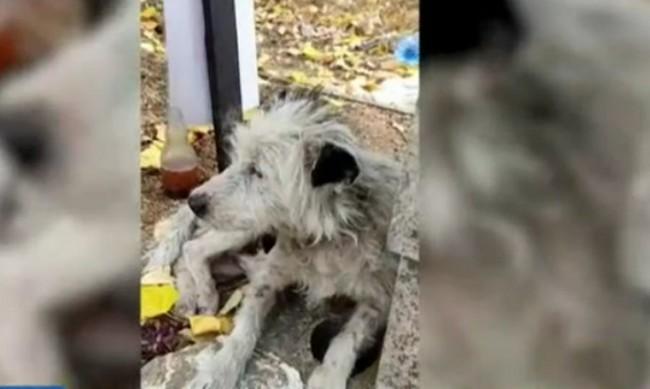Куче два месеца не изоставя гроба на стопанката си в Пищигово