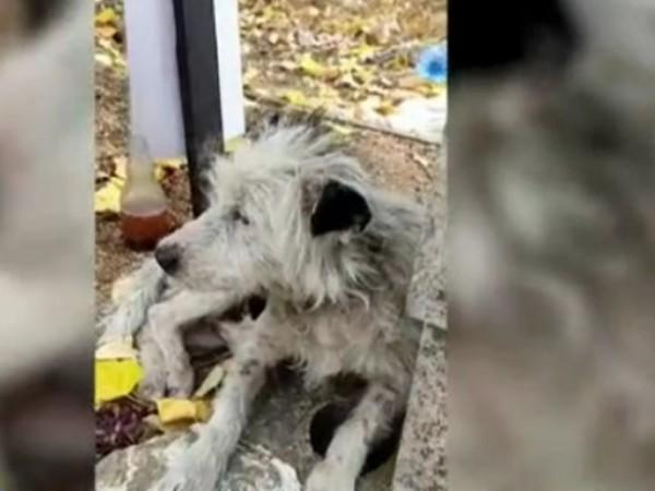 Куче живя повече от два месеца на гроба на своята