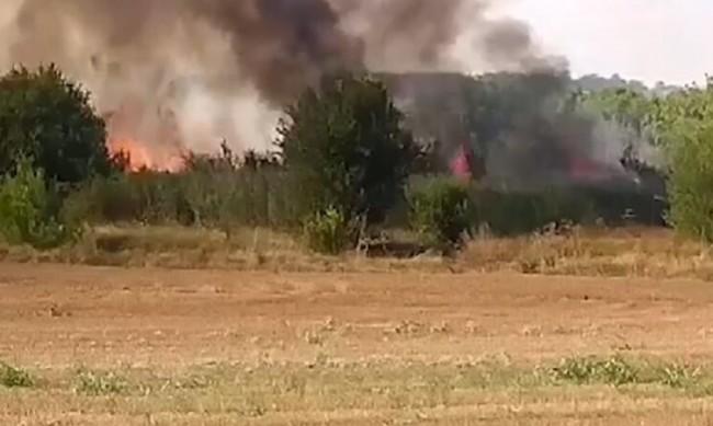 Пламна борова гора край Павел баня