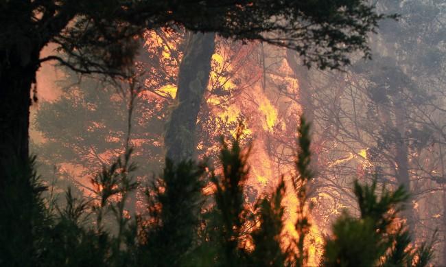 Пожарът край гръцкия град Патра продължава, евакуирани са 5 села