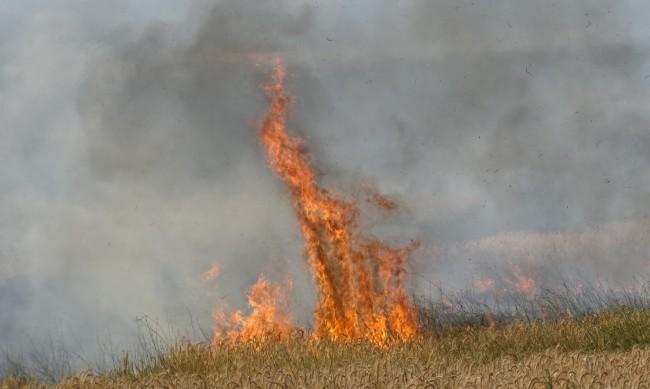 Жегата удари и България: Пожари в Стара Планина и в гората над Перник