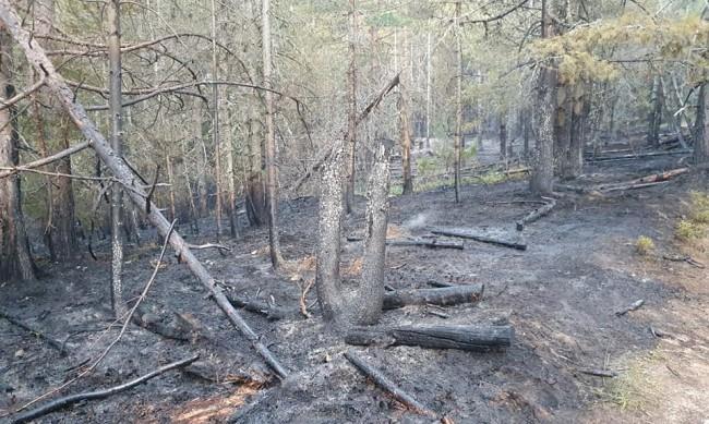 12 часа гасиха пожар край Сърница