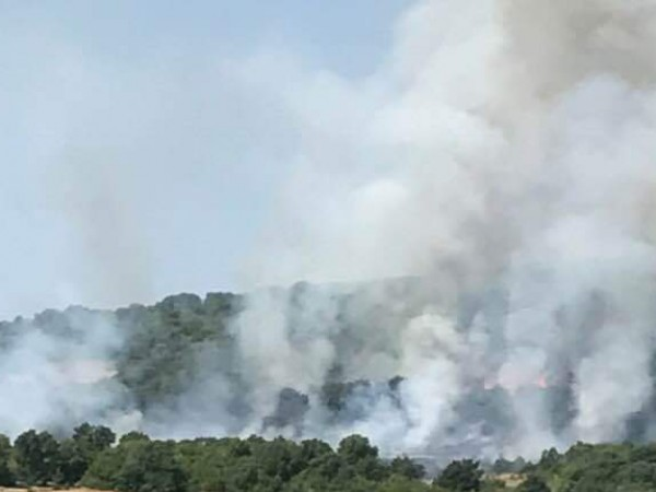 Нов пожар в Хасковско. Пламнали са сухи треви и широколистна