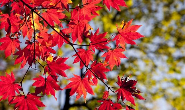 От неделя застудява, вървим към нормално есенно време