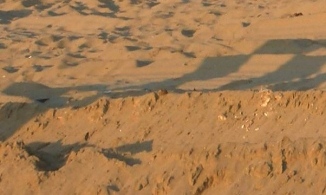 """Багер ли е унищожил над 800 м плажни дюни на """"Албена""""?"""