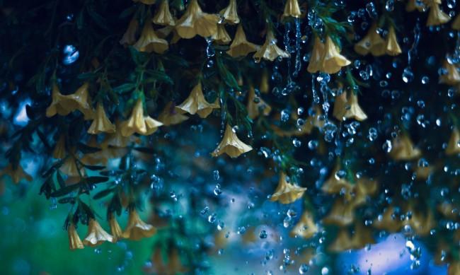 В петък ще има краткотрайни валежи от дъжд с гръмотевици