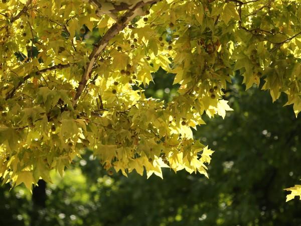 Днес е последният изцяло летен ден. Астрономическата есен тази година