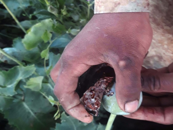 Индийските служби заловиха почти три тона хероин от Афганистан с