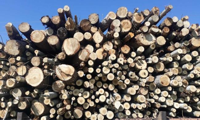 С по-хладното време - скок на цената на дървата за огрев