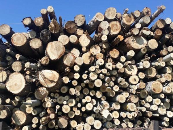 С 20 лева за тон е повишена цената на дървата